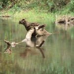 Raccoon Creek