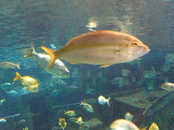 Aquarium of the Smokies